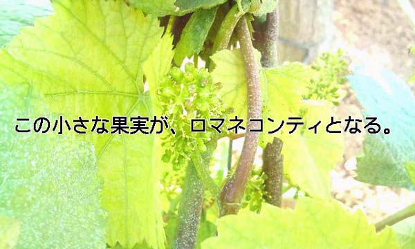 20090601160210.jpg